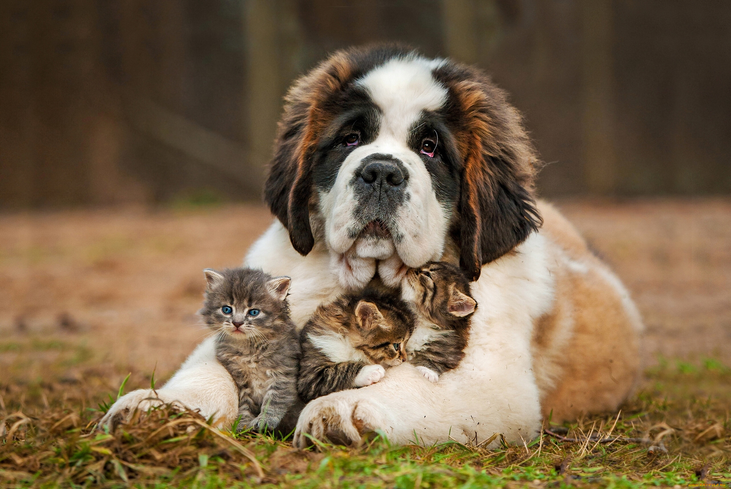 всегда обои на рабочий животные собаки гирлянды добавят